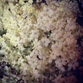 Fluff Elderflowers