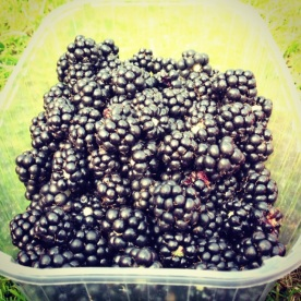 Blackberry harvest