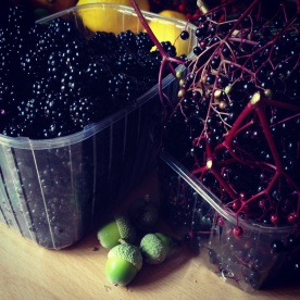 Blackberry & Elderberry harvest