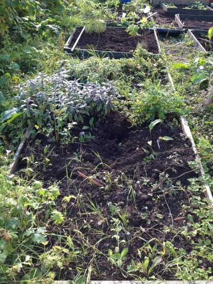Herb bed 01