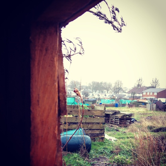 Saturday rain (view from the shed)