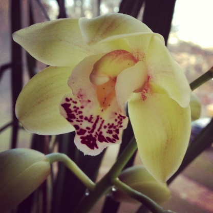 Orchid in flower