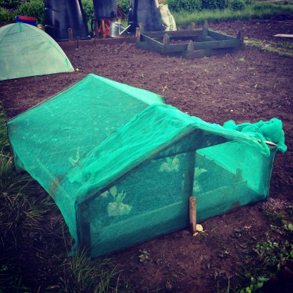 Cabbage cover