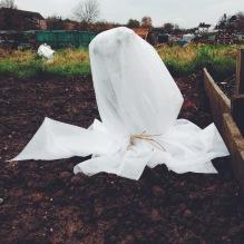 blanket for an artichoke