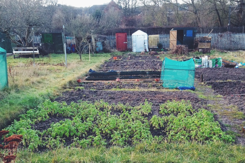 Legumes bed
