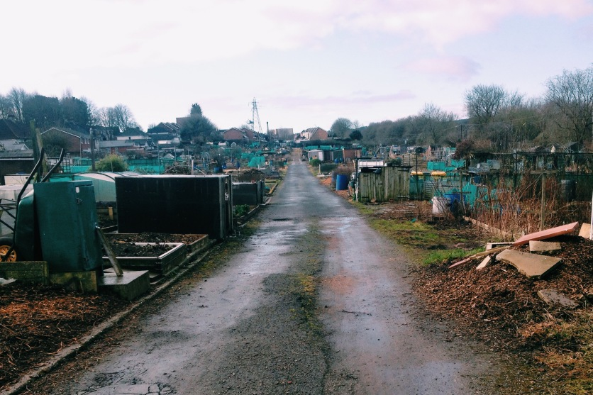 Coney Green Allotments